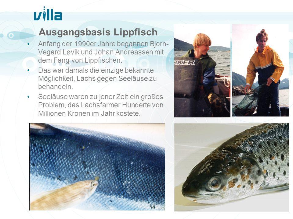 Ausgangsbasis Lippfisch Anfang der 1990er Jahre begannen Bjorn- Vegard Løvik und Johan Andreassen mit dem Fang von Lippfischen. Das war damals die ein