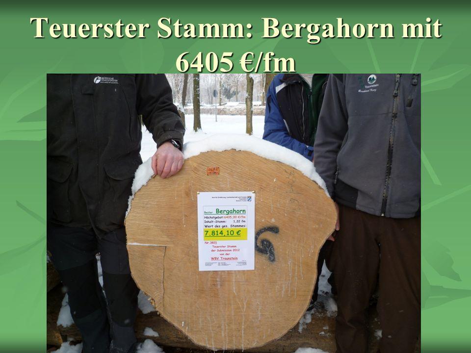 Teuerster Stamm: Bergahorn mit 6405 /fm