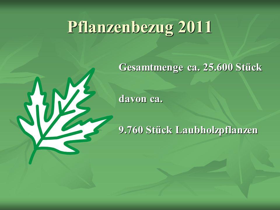 Pflanzenbezug 2011 Gesamtmenge ca. 25.600 Stück davon ca. 9.760 Stück Laubholzpflanzen