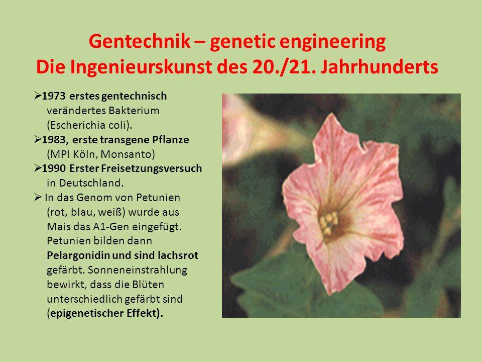 Gentechnik – genetic engineering Die Ingenieurskunst des 20./21. Jahrhunderts 1973 erstes gentechnisch verändertes Bakterium (Escherichia coli). 1983,