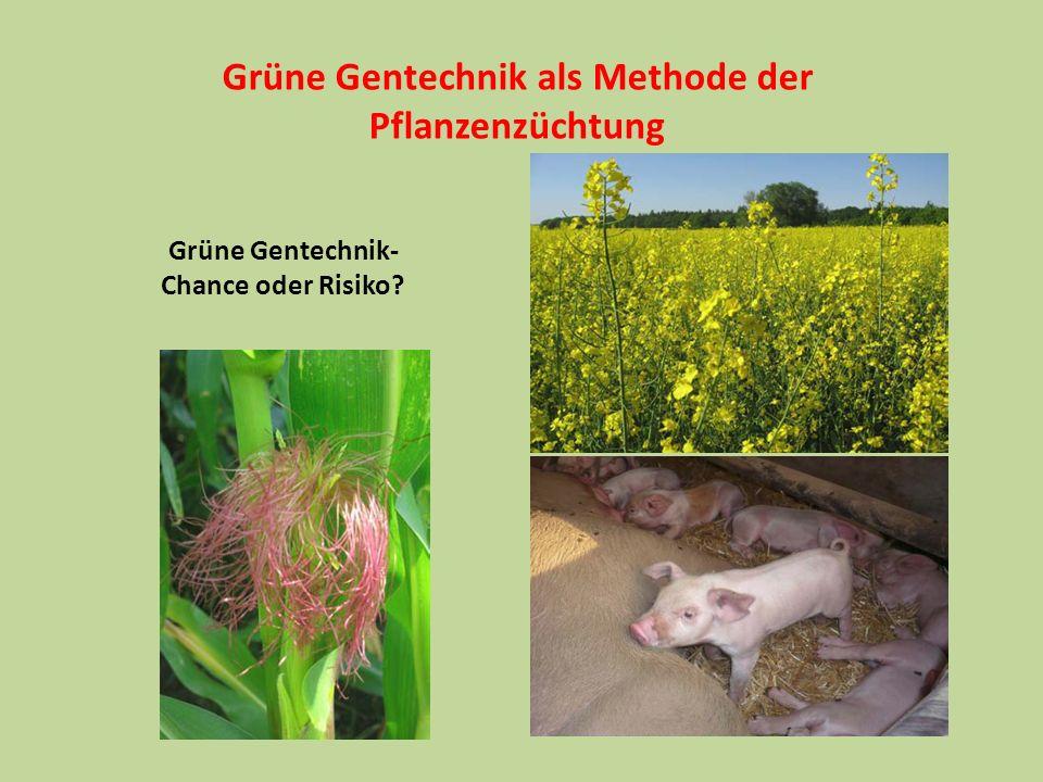 Ethische Überlegungen 1.Züchtung verändert die Genome von Tieren und Pflanzen.