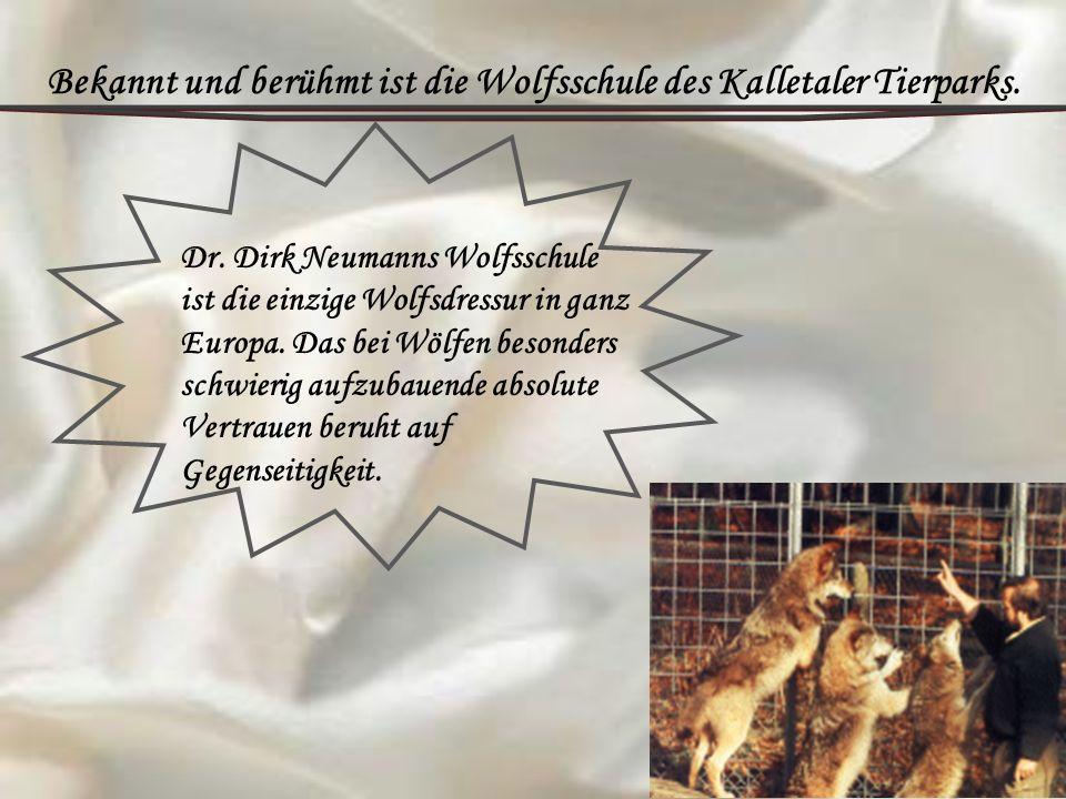 Dr. Dirk Neumanns Wolfsschule ist die einzige Wolfsdressur in ganz Europa. Das bei Wölfen besonders schwierig aufzubauende absolute Vertrauen beruht a