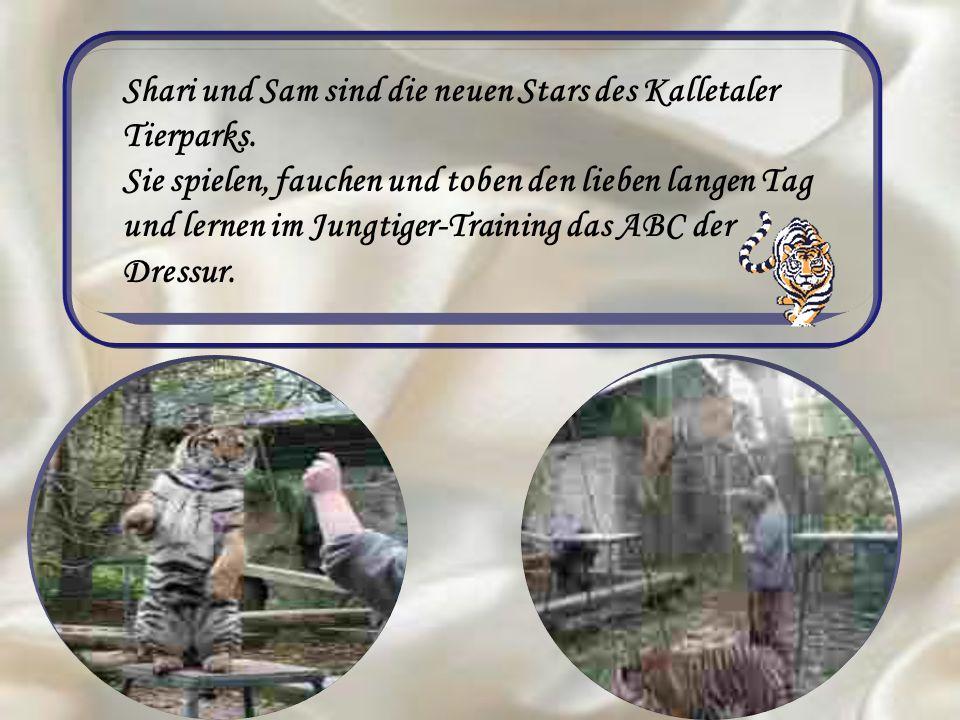 Shari und Sam sind die neuen Stars des Kalletaler Tierparks. Sie spielen, fauchen und toben den lieben langen Tag und lernen im Jungtiger-Training das
