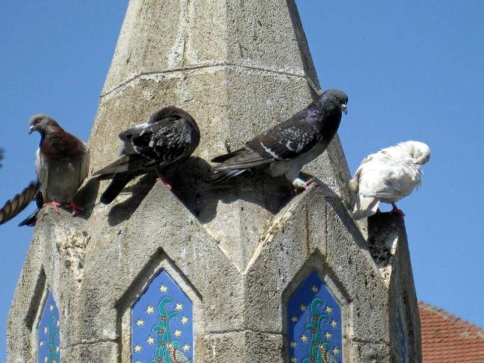 Am kühlen Nass wo sich nicht nur Touristen, sondern auch Tauben gerne aufhalten!