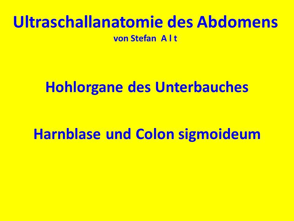 Ultraschallanatomie des Abdomens von Stefan A l t Hohlorgane des Unterbauches Harnblase und Colon sigmoideum