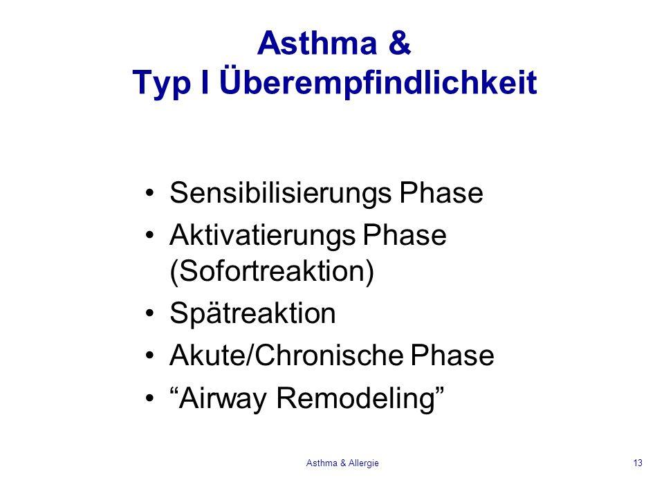 Asthma & Allergie13 Asthma & Typ I Überempfindlichkeit Sensibilisierungs Phase Aktivatierungs Phase (Sofortreaktion) Spätreaktion Akute/Chronische Pha