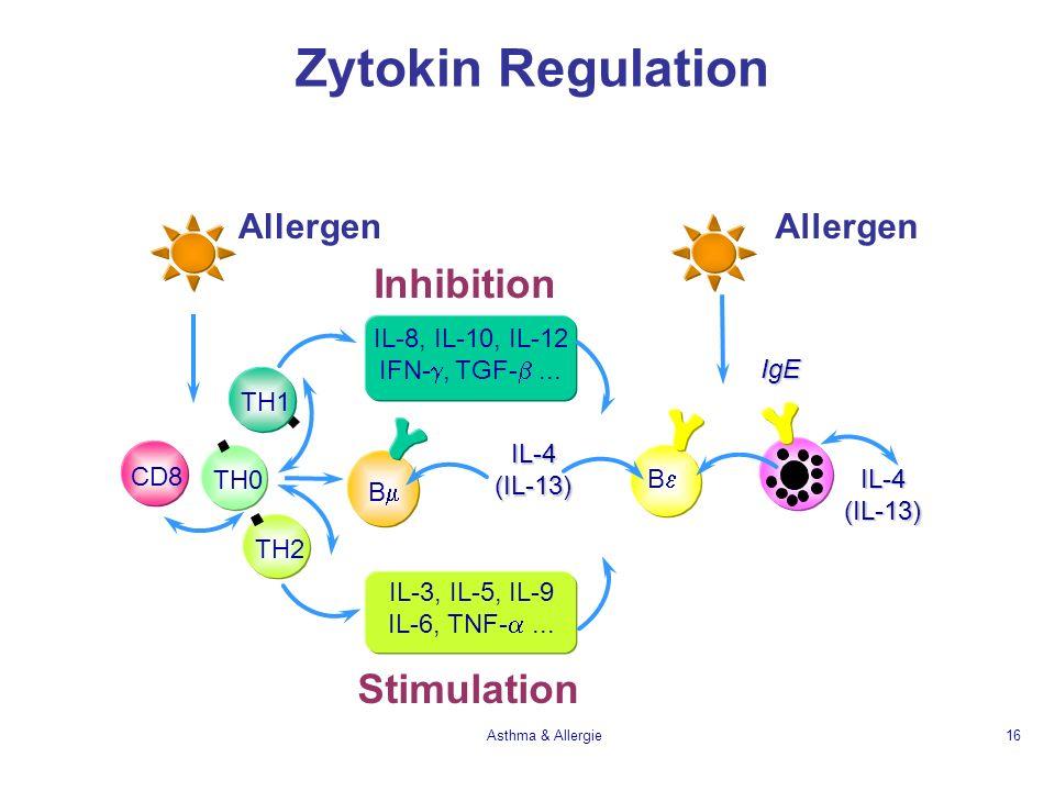 Asthma & Allergie16 Zytokin Regulation IgE B Inhibition IL-8, IL-10, IL-12 IFN-, TGF-... B TH0 Stimulation IL-3, IL-5, IL-9 IL-6, TNF-... TH1 TH2 CD8