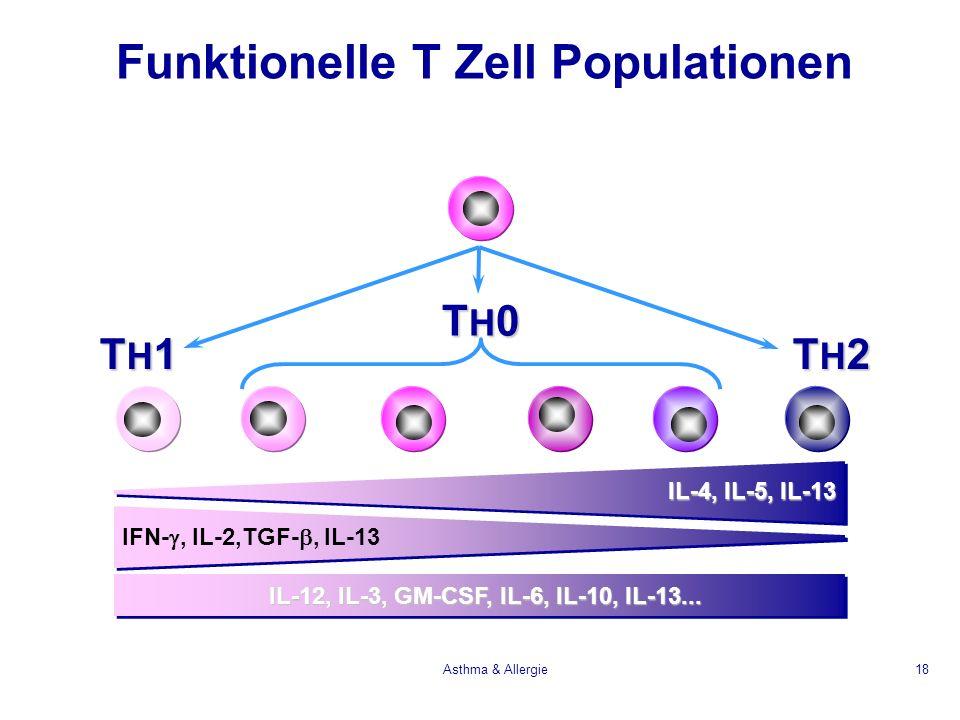 Asthma & Allergie18 TH2TH2TH2TH2 TH1TH1TH1TH1 IL-12, IL-3, GM-CSF, IL-6, IL-10, IL-13... IL-4, IL-5, IL-13 IFN-, IL-2,TGF-, IL-13 TH0TH0TH0TH0 Funktio