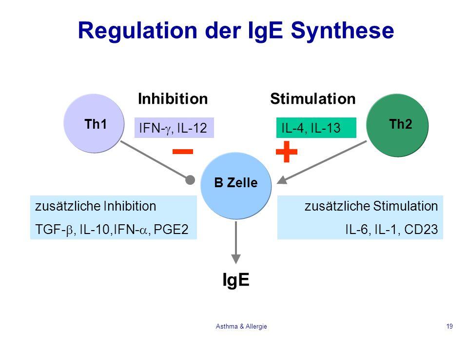 Asthma & Allergie19 Regulation der IgE Synthese Th1Th2 B Zelle IgE IL-4, IL-13 IFN-, IL-12 + zusätzliche Stimulation IL-6, IL-1, CD23 zusätzliche Inhi