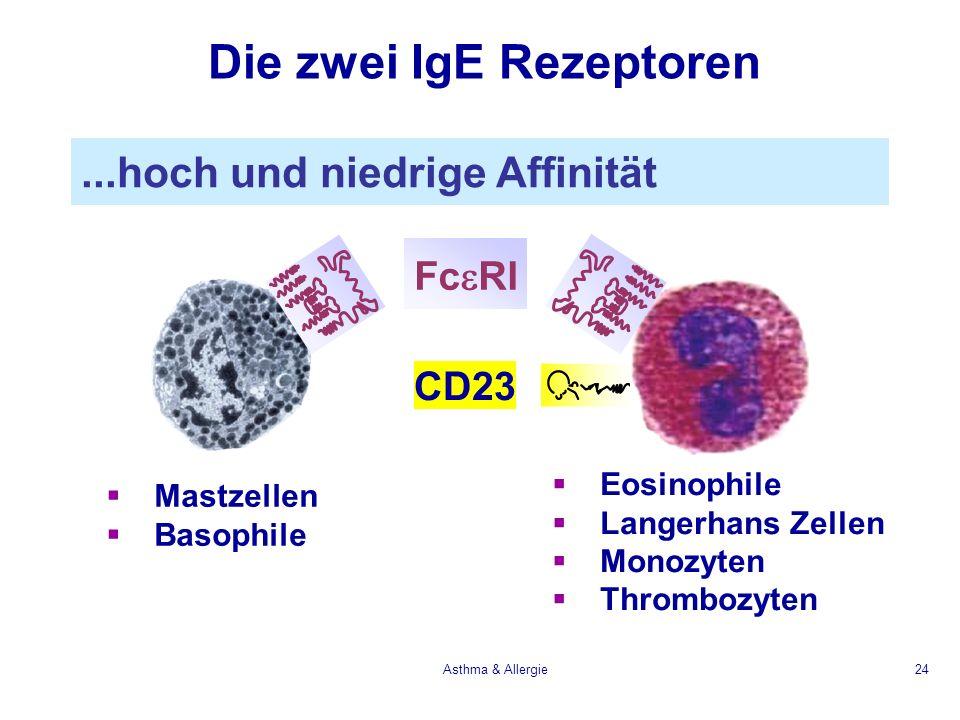 Asthma & Allergie24 Die zwei IgE Rezeptoren Mastzellen Basophile Eosinophile Langerhans Zellen Monozyten Thrombozyten Fc RI CD23...hoch und niedrige A