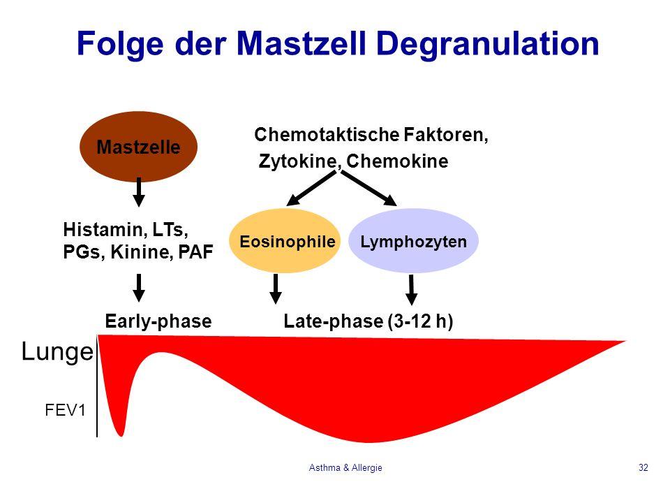 Asthma & Allergie32 Folge der Mastzell Degranulation Histamin, LTs, PGs, Kinine, PAF Chemotaktische Faktoren, Zytokine, Chemokine Lunge FEV1 Eosinophi
