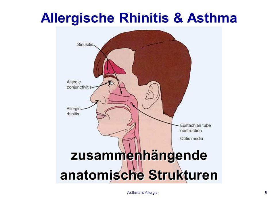 Asthma & Allergie29 Bronchokonstriktion Mucus Sekretion Vasodilatation Permeabilität Chemotaxis Eosinophile Lymphocyten Basophile normale Bronchien Wirkung der Mastzell Mediatoren LTC4/LTD4 PAF Histamin PGD2 LTB4 Zytokine Chemokine