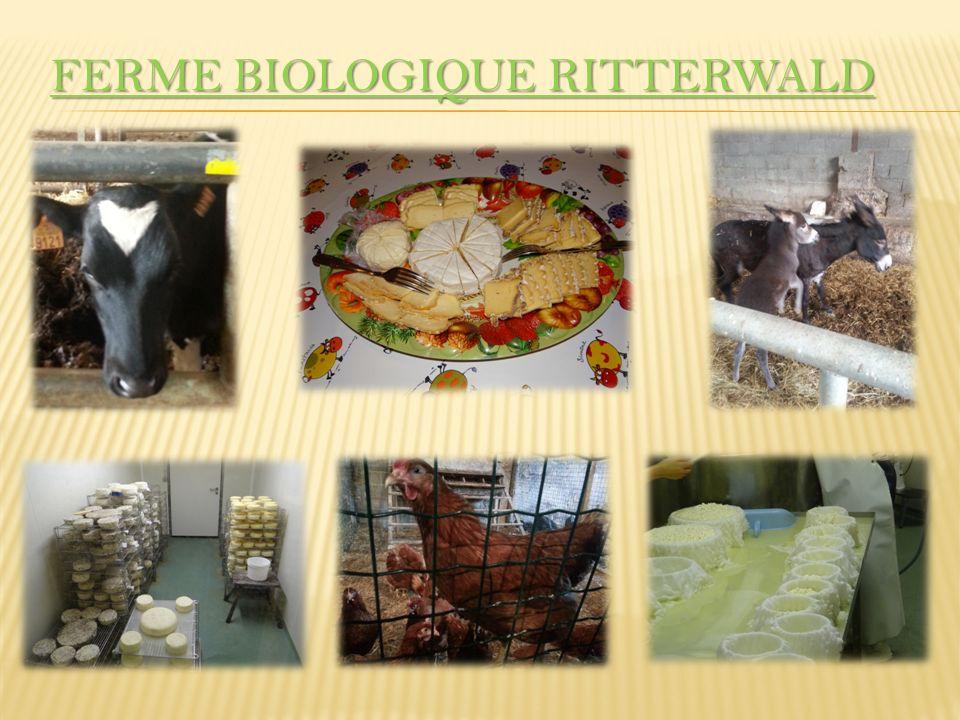 240 Tiere, davon 100 Milchkühe 480 000 Liter Milch im Jahr 250 Hektar Lernbauernhof