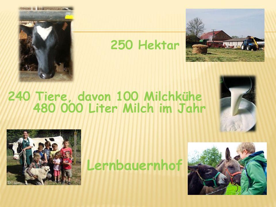 seit 3 Jahren ökologischer Landbau seit 2012 Gütezeichen AB Erzeugnisse: Butter, Münsterkäse, Tomme, Camembert, Frischkäse ….