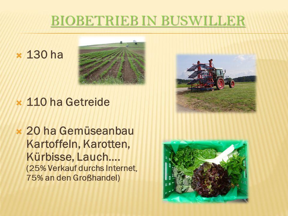 BIOBETRIEB IN BUSWILLER 130 ha 110 ha Getreide 20 ha Gemüseanbau Kartoffeln, Karotten, Kürbisse, Lauch….