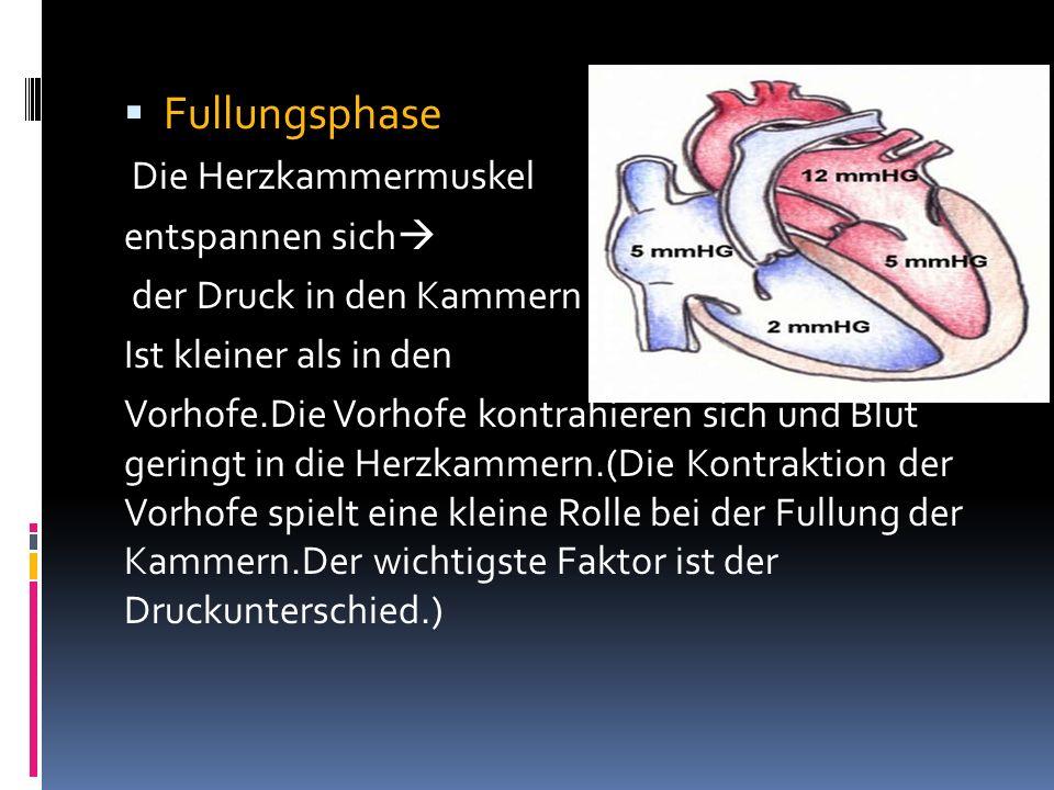 Fullungsphase Die Herzkammermuskel entspannen sich der Druck in den Kammern Ist kleiner als in den Vorhofe.Die Vorhofe kontrahieren sich und Blut geri