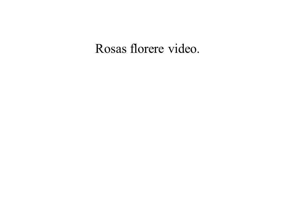 Rosas florere video.