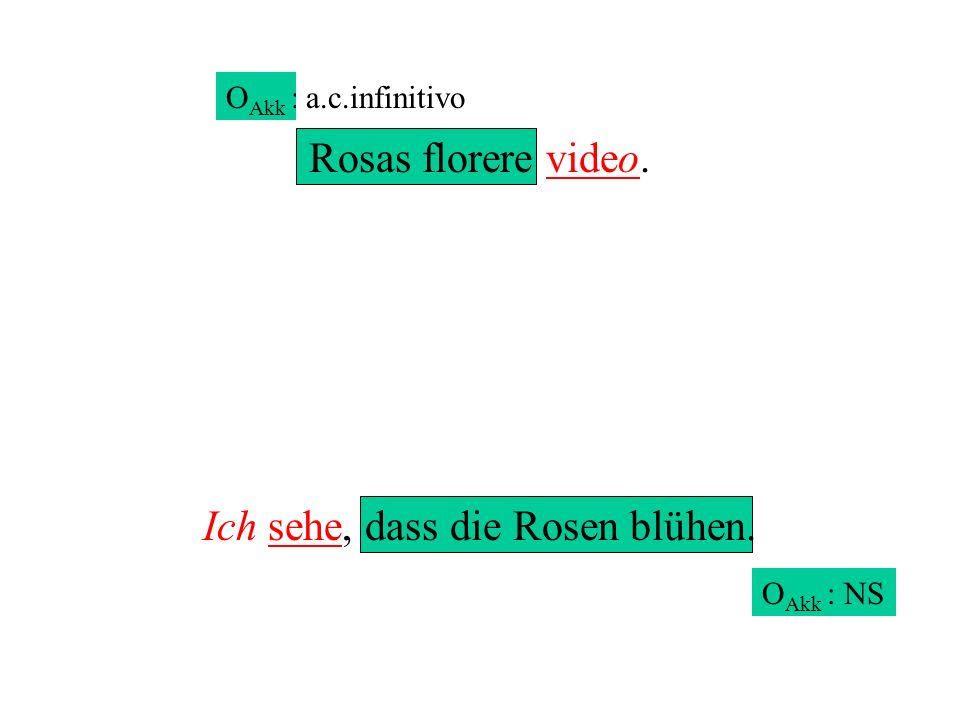 Rosas florere video. Ich sehe, dass die Rosen blühen. O Akk : NS O Akk : a.c.infinitivo