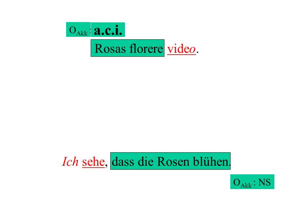 Rosas florere video. Ich sehe, dass die Rosen blühen. O Akk : NS O Akk : a.c.i.