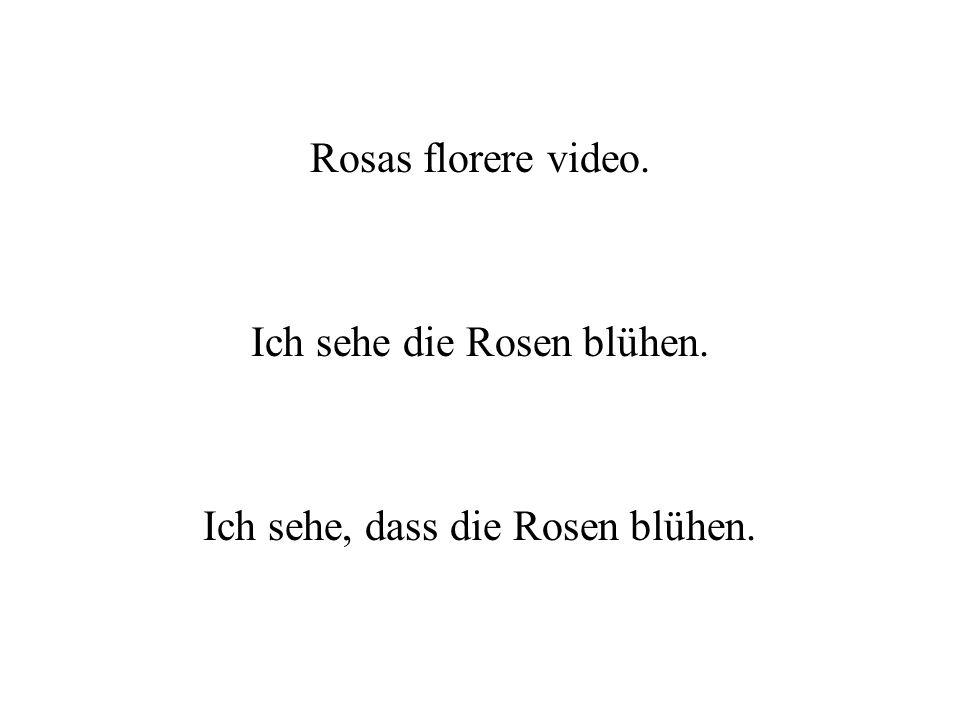 Rosas florere video. Ich sehe die Rosen blühen. Ich sehe, dass die Rosen blühen.