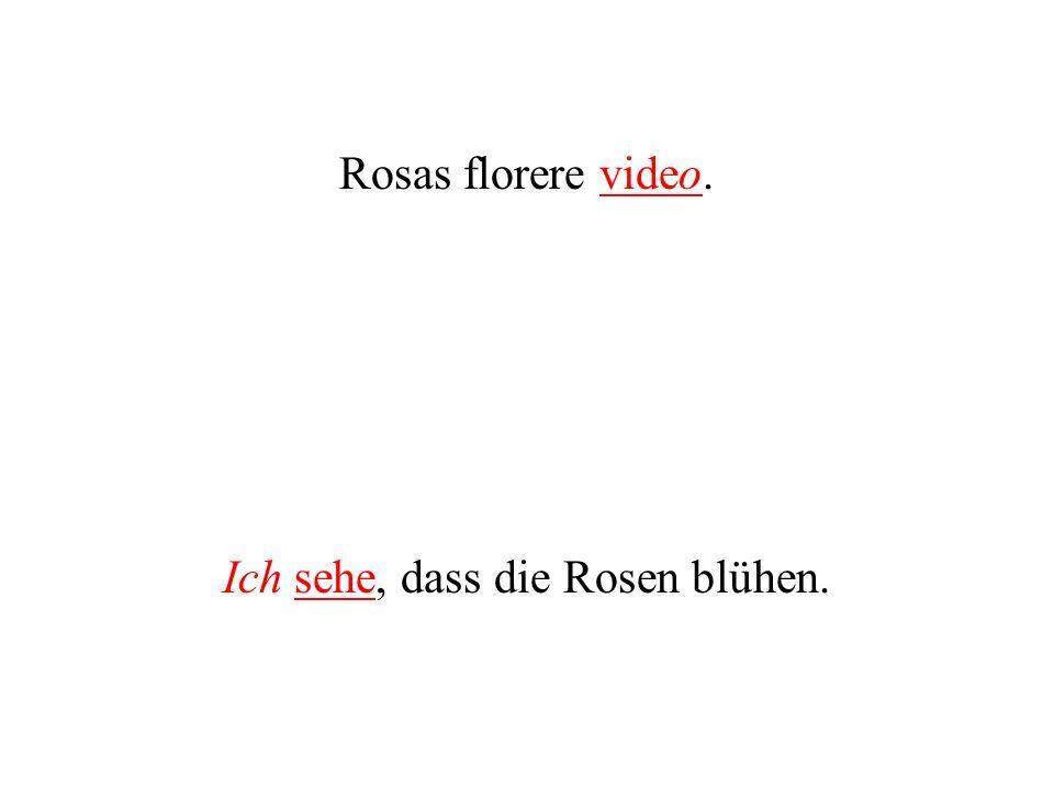 Rosas florere video. Ich sehe, dass die Rosen blühen.