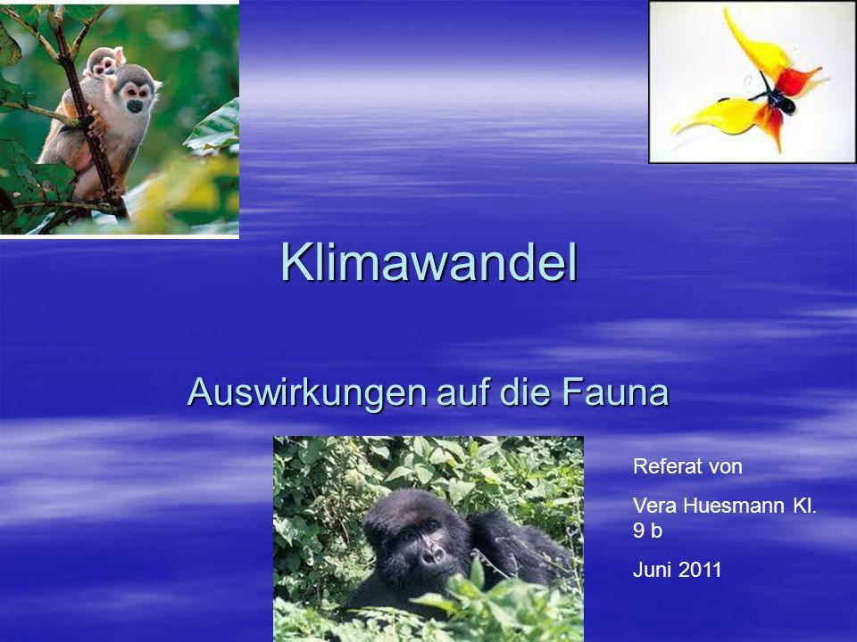 Klimawandel Auswirkungen auf die Fauna Referat von Vera Huesmann Kl. 9 b Juni 2011