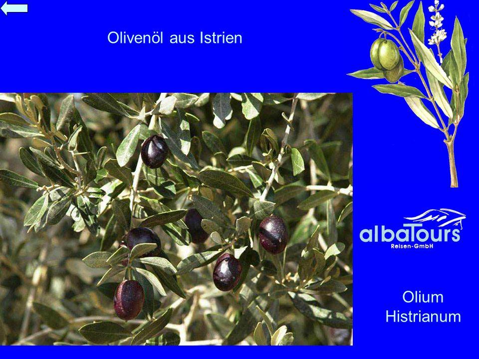 Olivenöl aus Istrien Olium Histrianum