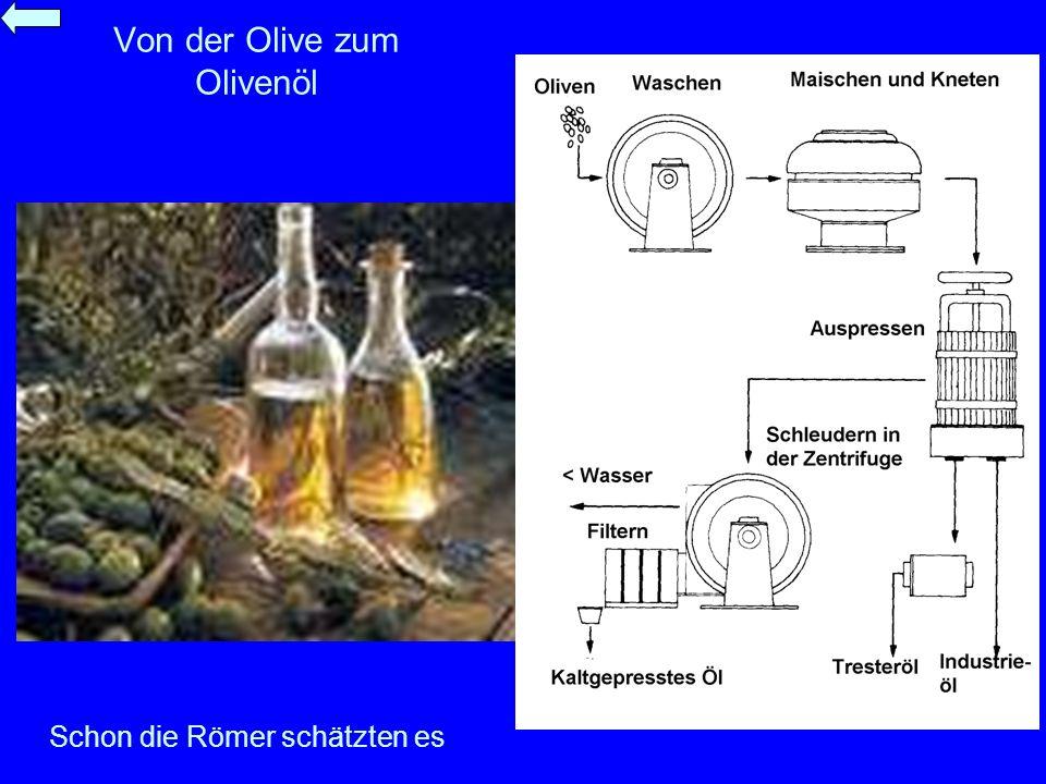 Von der Olive zum Olivenöl Schon die Römer schätzten es