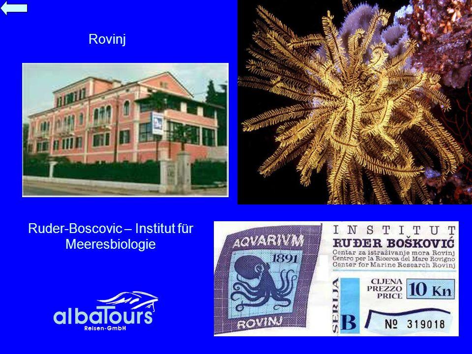 Rovinj Ruder-Boscovic – Institut für Meeresbiologie