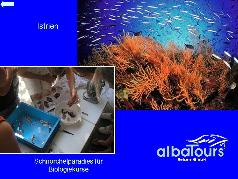 Schnorchelparadies für Biologiekurse Istrien