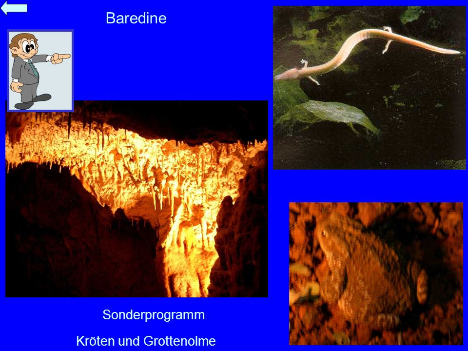 Baredine Sonderprogramm Kröten und Grottenolme