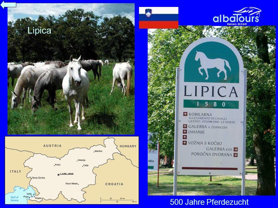 Lipica 500 Jahre Pferdezucht