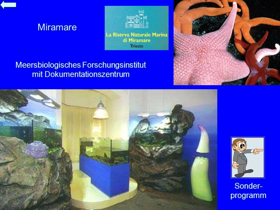 Miramare Meersbiologisches Forschungsinstitut mit Dokumentationszentrum Sonder- programm