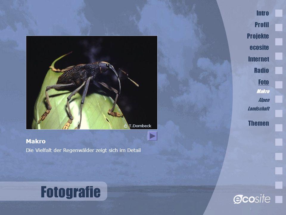 Fotografie © T.Dombeck Makro Die Vielfalt der Regenwälder zeigt sich im Detail Intro Profil Projekte ecosite Internet Radio Foto Makro Alpen Landschaft Themen
