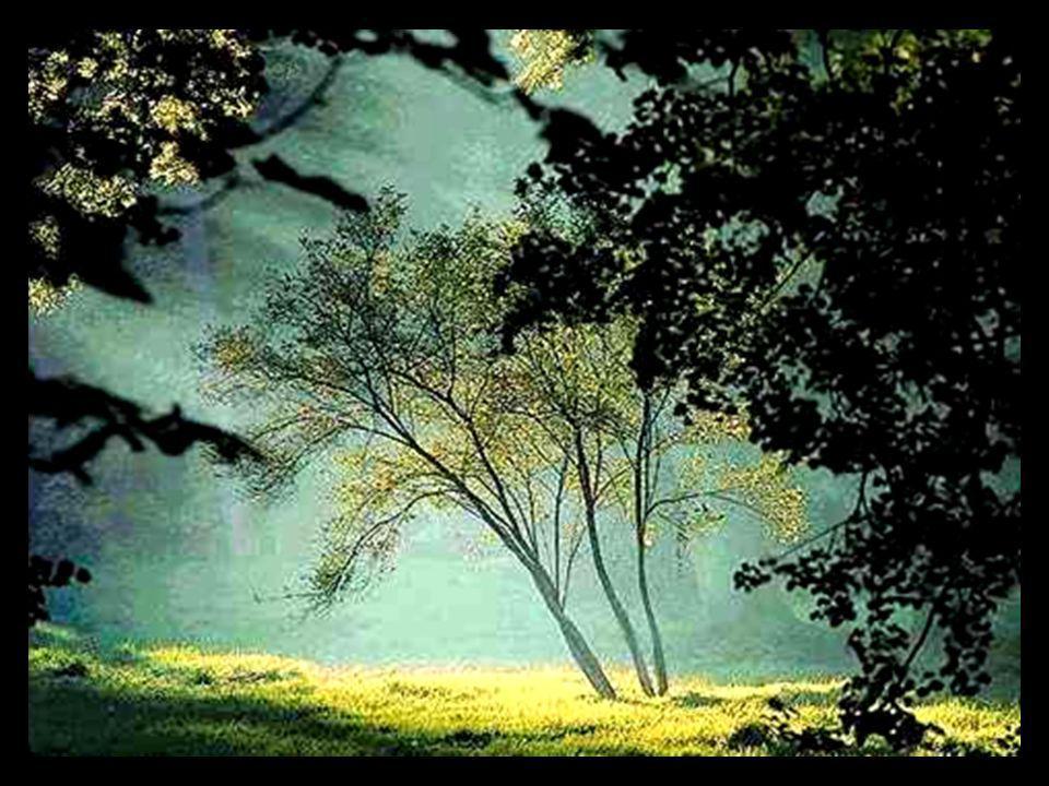 Habt Ehrfurcht vor dem Baum. (Respeitem a árvore.) Er ist ein einziges Wunder. (Ela é um milagre ímpar.) Alexander von Humboldt