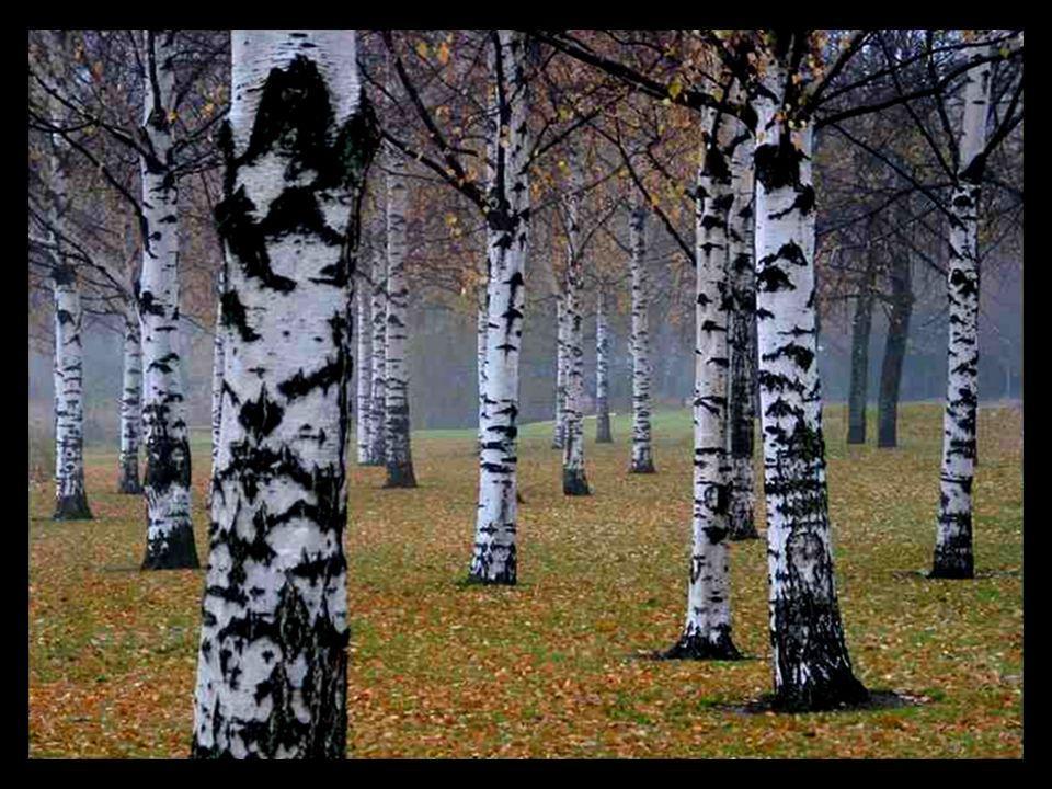 Nur der Einsame findet den Wald. (Somente o solitário encontra a floresta.) Wo ihn mehrere suchen, da flieht er und nur die Bäume bleiben zurück. (Ond