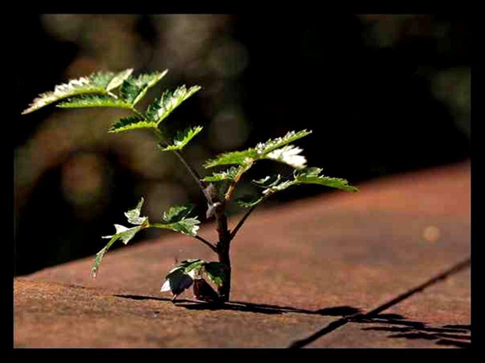 Der Baum (A árvore) Die Bäume Die Bäume (As árvores)
