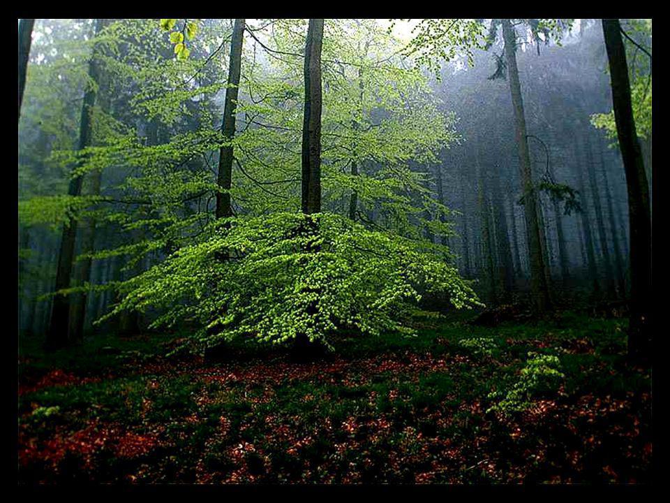 Die Seele wird beim Pflastertreten krumm. (Andar no asfalto deforma a alma.) Mit Bäumen kann man wie mit Brüdern reden (Com árvores pode-se conversar