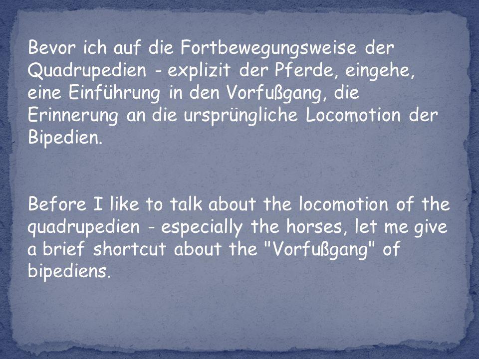 Bevor ich auf die Fortbewegungsweise der Quadrupedien - explizit der Pferde, eingehe, eine Einführung in den Vorfußgang, die Erinnerung an die ursprüngliche Locomotion der Bipedien.