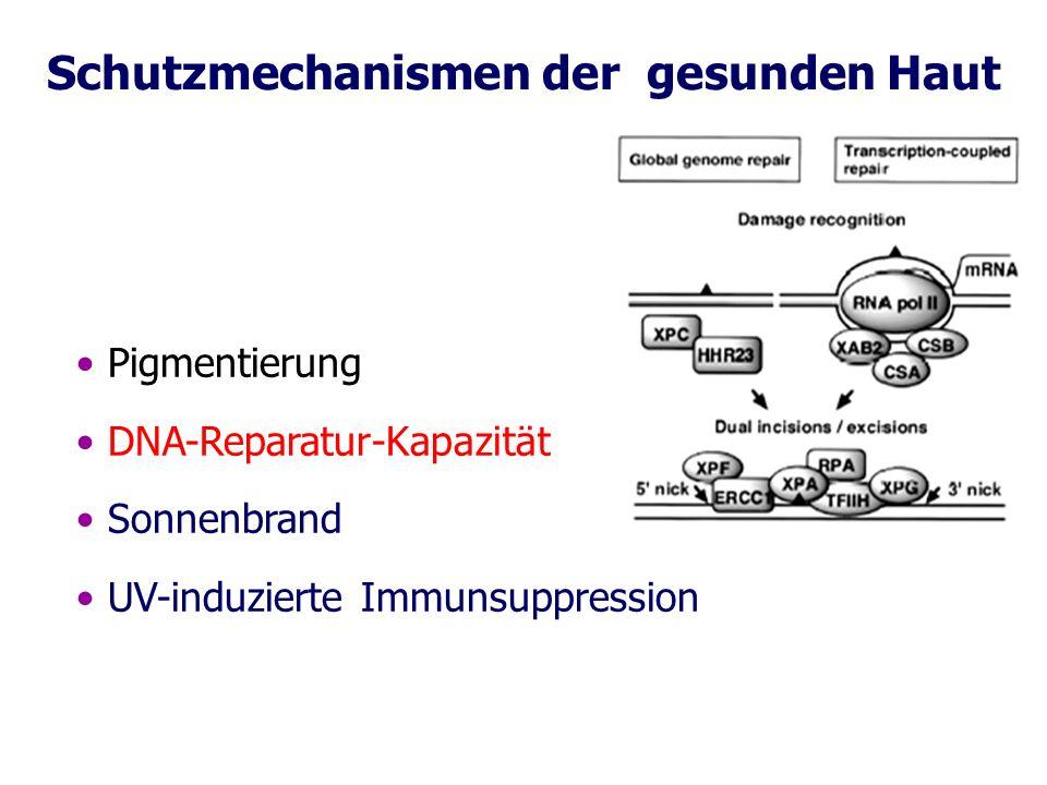 Schutzmechanismen der gesunden Haut Pigmentierung DNA-Reparatur-Kapazität Sonnenbrand UV-induzierte Immunsuppression