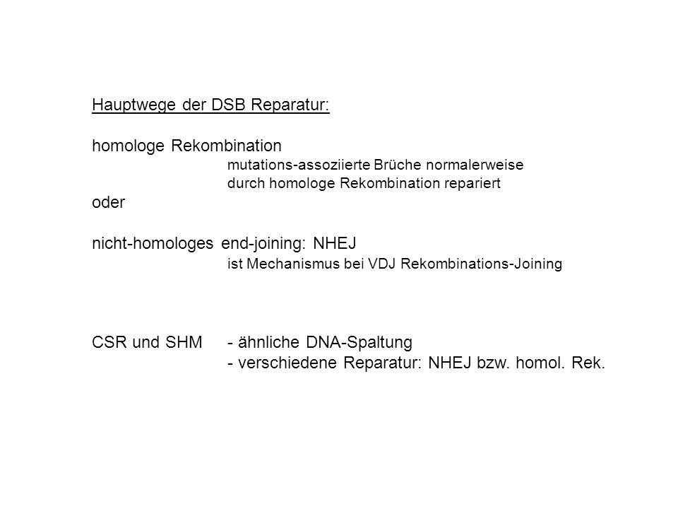 Hauptwege der DSB Reparatur: homologe Rekombination mutations-assoziierte Brüche normalerweise durch homologe Rekombination repariert oder nicht-homol