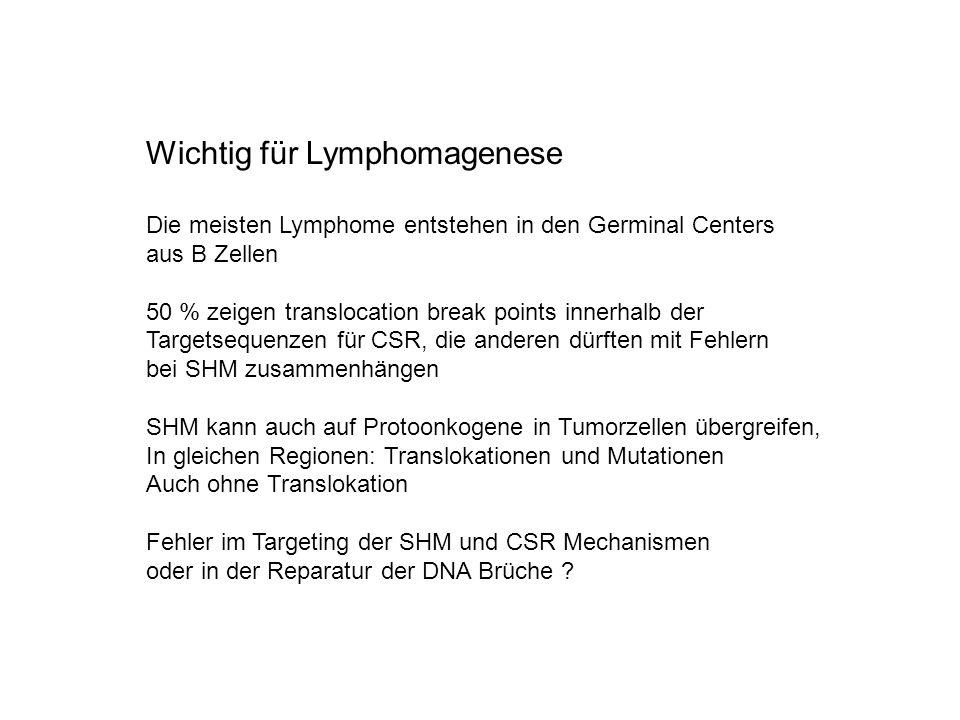 Wichtig für Lymphomagenese Die meisten Lymphome entstehen in den Germinal Centers aus B Zellen 50 % zeigen translocation break points innerhalb der Ta