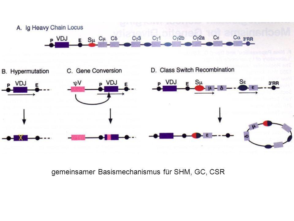 gemeinsamer Basismechanismus für SHM, GC, CSR