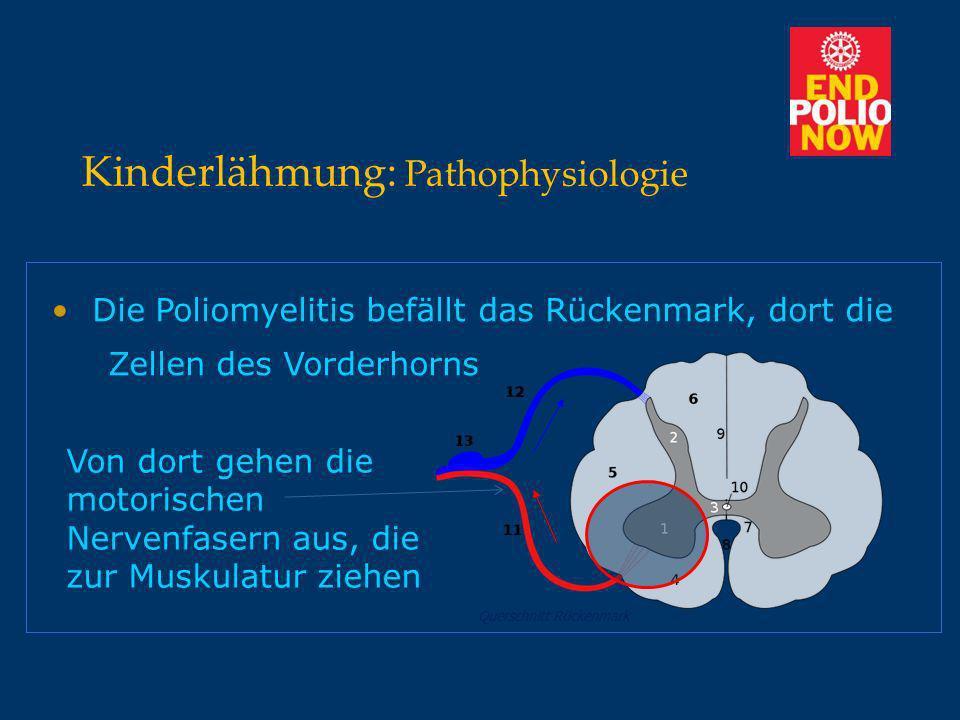 Kinderlähmung: Übertragung Reservoir : Mensch -> Rachen, Darm / Stuhl Infektionsweg : Tröpfchen-, Schmierinfektion Primärer Infektionsort : Darm (Entera) -> Durchfall -> Virämie -> Befall des ZNS (Hirn, Rückenmark) Infektiosität : Darm : 72 h – mehrere Wochen Rachen : 36 h – 1 Woche Inkubationszeit : 3-35 Tage
