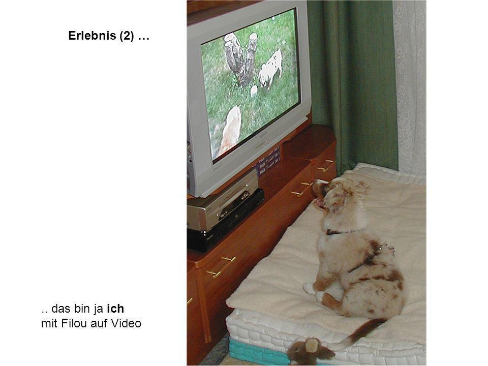 Erlebnis (2) ….. das bin ja ich mit Filou auf Video
