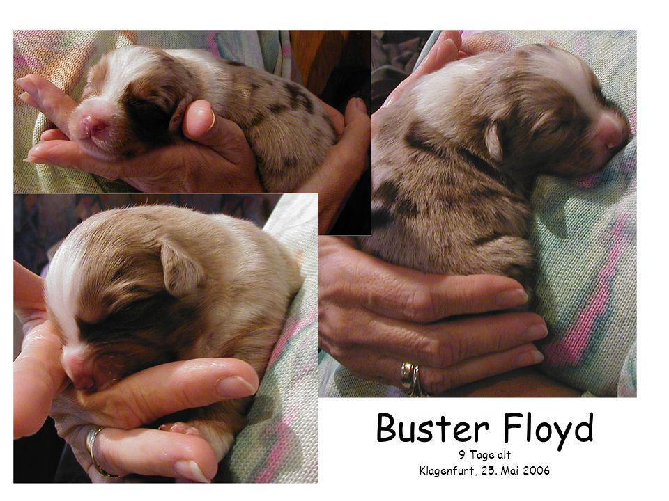 Buster Floyd 9 Tage alt Klagenfurt, 25. Mai 2006