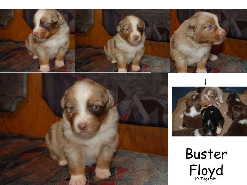 Buster Floyd 19 Tage alt