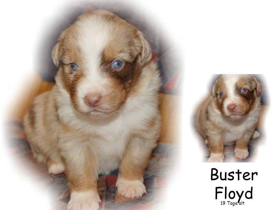 Buster Floyd 26 Tage alt