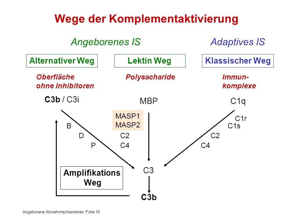 Angeborene Abwehrmechanismen Folie 10 Wege der Komplementaktivierung Alternativer WegLektin Weg Klassischer Weg Oberfläche ohne Inhibitoren Polysachar