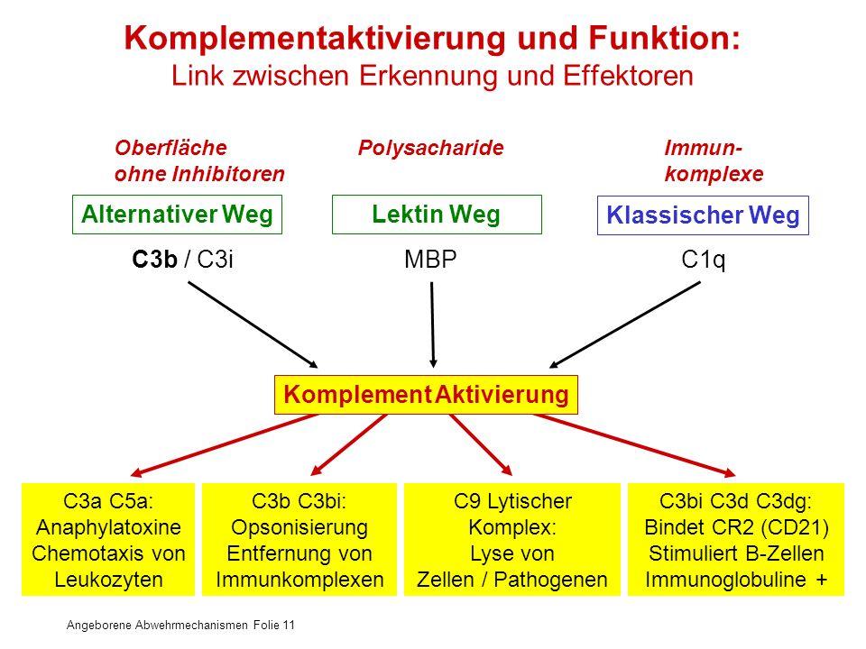 Angeborene Abwehrmechanismen Folie 11 Komplementaktivierung und Funktion: Link zwischen Erkennung und Effektoren Alternativer WegLektin Weg Klassische